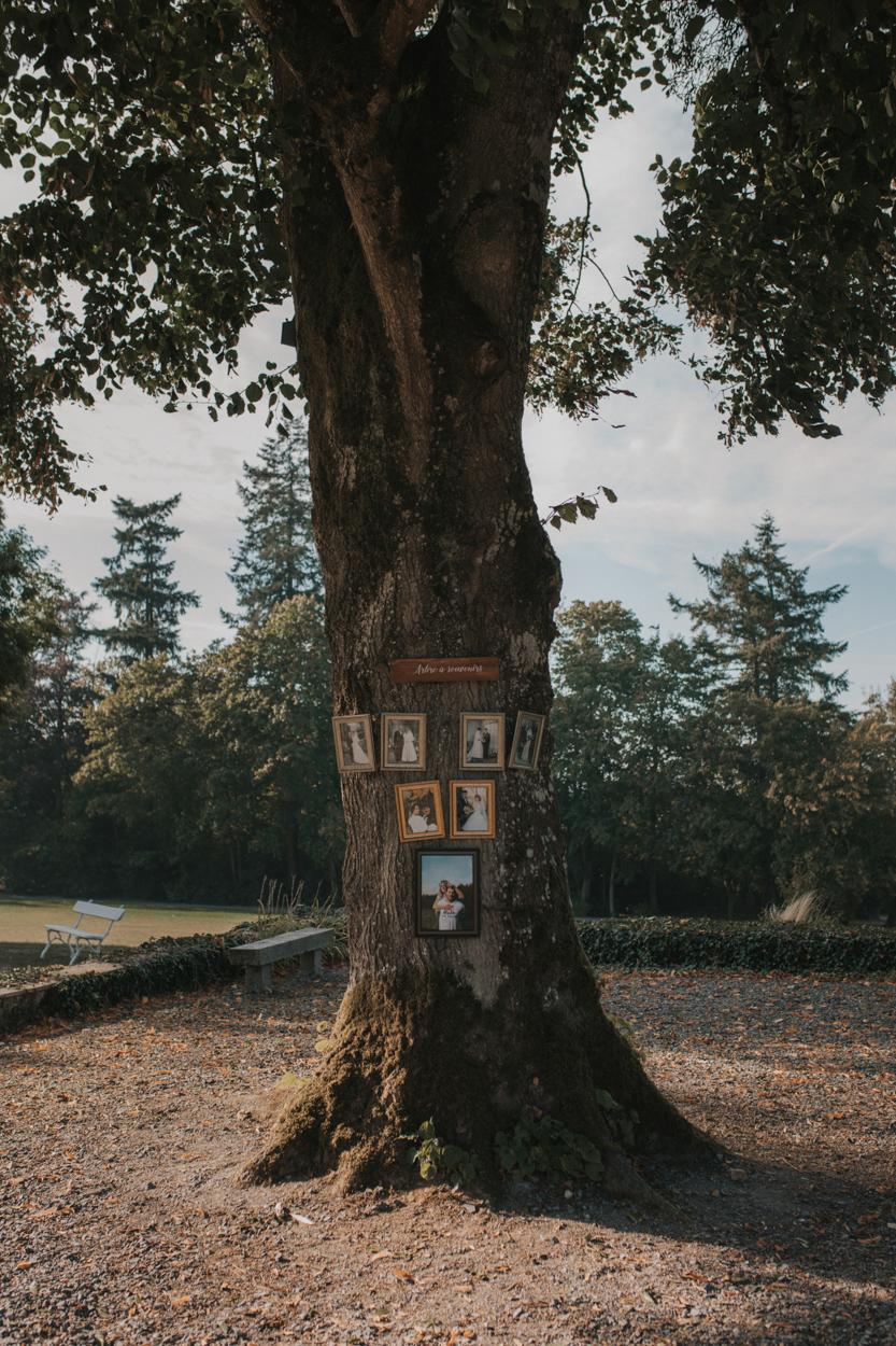 arbre généalogique en photos de mariage sur vrai arbre